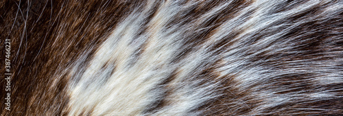 Fotografie, Obraz close up of brown fur texture
