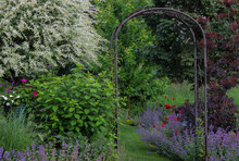 A Variegated White Ornamental Willow Tree Is The Focal Point Of This Small Country Garden, Surrounded By Pots Of Geraniums, Petunias, An Arbor With Climbing Clematis