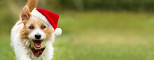 Happy Cute Christmas Santa Pet...