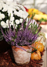 Lavender Flowers In A Basket
