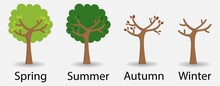 The Same Tree In The Four Seasons With Text
