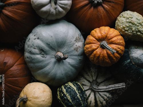 Cuadros en Lienzo Seasonal image of gourds and pumpkins