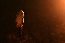 Face To Face With Barn Owl