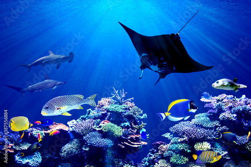 background of underwater coral reef and hammerhead shark meeting Manta Ray