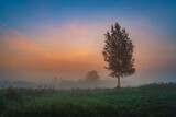 Sunrise over the field with the lone birch tree and mist