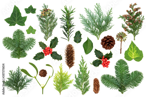 Fotografering Winter greenery with natural flora & fauna of holly, ivy, mistletoe, cedar cypress, spruce fir, yew & pine cones