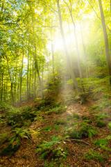 Schöner Wald im Sommer mit Sonne