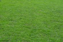Green Grass For Texture Backgr...