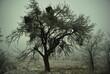 Zimowy zarys przydrożnego drzewa