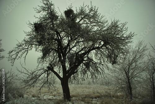 Obraz Zimowy zarys przydrożnego drzewa - fototapety do salonu