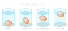 Fresh Egg Test. Finding Daily Fresh Eggs, Weekly Old And Stale Eggs With The Flotation And Sinking Experiment. Freshness Experiment In Clear Glass Container, Cup. Illustration Vector