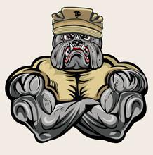 Military Bulldog Marine Corps Devil Dog