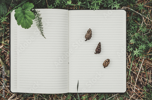 High angle view of naturalist's notebook with a variety of small pine cones on w Fototapet