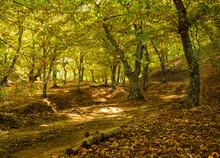 Autumn Landscape With Chestnut...