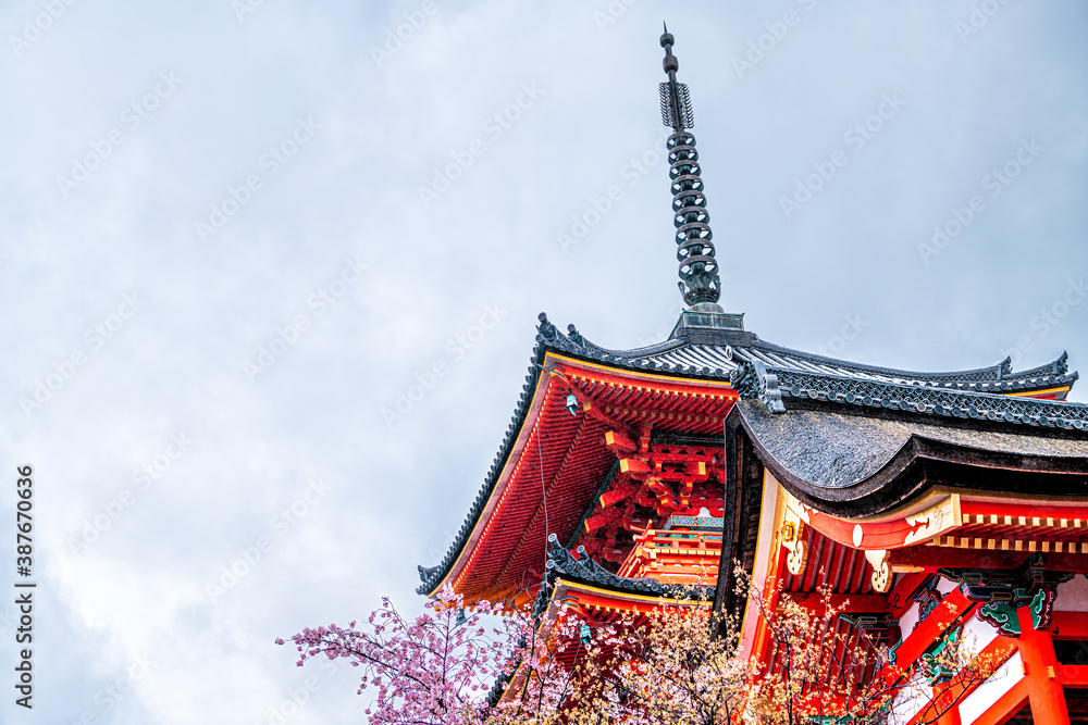 Fototapeta Kyoto, Japan cherry blossom sakura tree in spring with blooming flowers in garden park and vermilion red Kiyomizudera temple shrine pagoda building architecture low angle view