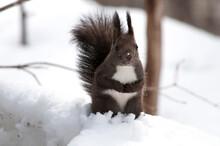 雪の上で立ち上がる野...