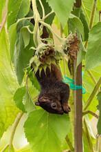 One Cute Grey Squirrel Hanging...
