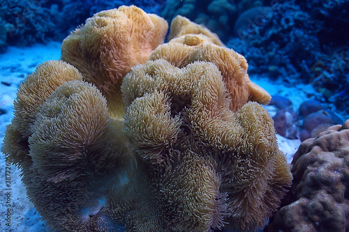 Obraz coral reef macro / texture, abstract marine ecosystem background on a coral reef - fototapety do salonu
