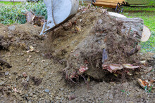 Excavator Clearing Land The Uprooting Of Trees Into Uproot A Large Stump Using An Excavator.