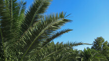 A Close Up Of A Palm Tree Branches Against Blue Sky
