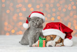 Fototapeta Kawa jest smaczna - Sleepy Jack russell terrier puppy and kitten are together. Pets wearing santa's hats on festive background
