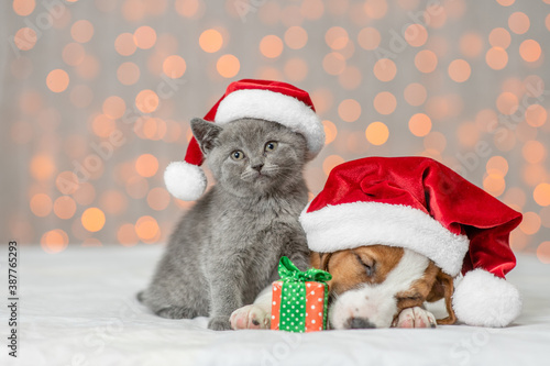 Sleepy Jack russell terrier puppy and kitten are together. Pets wearing santa's hats on festive background