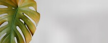 Banner Of Home Plant Yellow Mo...
