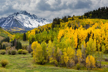 Autumn On The Dallas Divide. Beautiful Autumn Color In The San Juan Mountains Of Colorado.