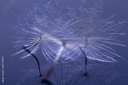 Dandelion seed - macro photo Billede på lærred