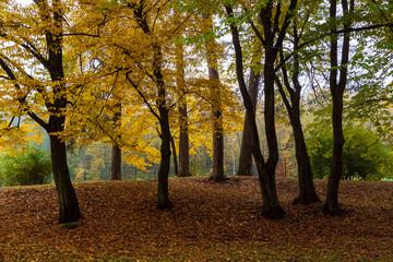 Park Konstytucji 3 Maja w Białymstoku, Jesień w parku Zwierzynieckim, Białystok, Podlasie