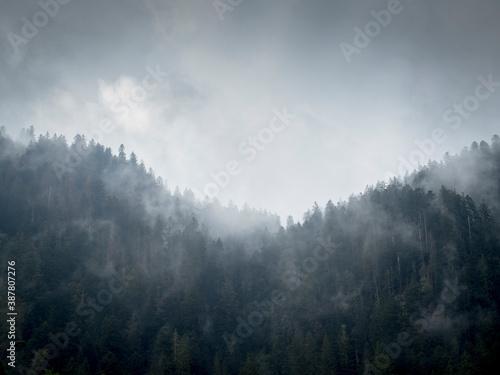 Montage et forêt de sapin dans la brume Canvas Print