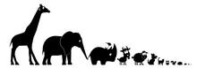 Animals Silhouettes Illustrations Sorted By Size Isolated On White Background. Giraffe, Elephant, Rhino, Sheep, Goat, Dog, Cat, Owl, Squirrel, Hedgehog, Mice, Bird