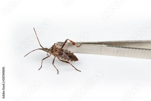 Foto Cockroach bug on a white background