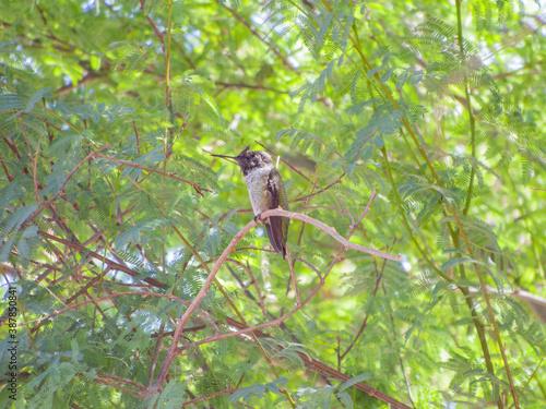 Naklejka premium Close up shot of cute hummingbird resting on brunch