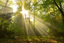 Sun Light Nature Sunrays In Th...