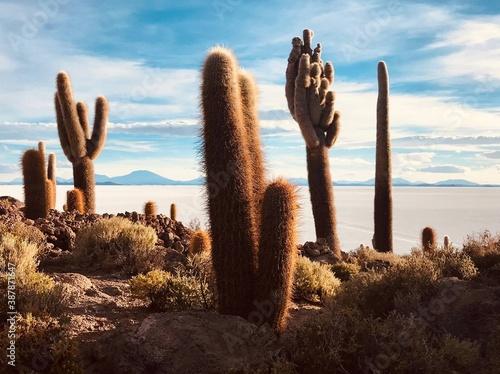 Foto Unique succulent plant cacti in desert