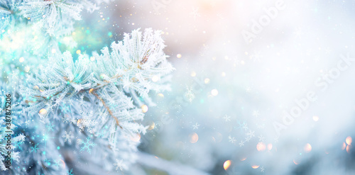 Christmas winter blurred background. Xmas tree with snow, holiday background. New year Winter art design, wide screen holiday border