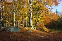 Jesienny Las W Karkonoszach.