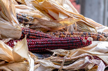 Colorful Ears Of Corn Called I...