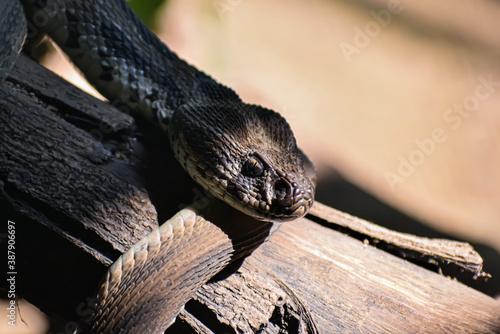Fotografia snake on the tree