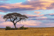 canvas print picture pink african sunset over acacia tree, nature wilderness scene, Africa safari