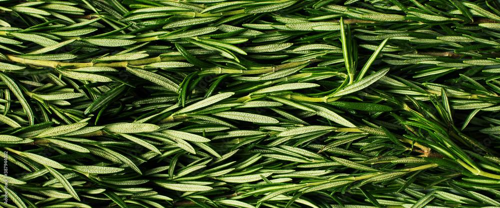 Fototapeta Macro fresh rosemary green organic background
