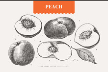 Hand-drawn Peach Dessert Fruit. Exotic Fruits, Whole, And Cut. Organic Food Concept. It Can Be Used As A Decoration Element For Markets, Menus, And Packaging. Vector Botanical Illustrations.