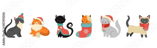 Obraz Collection of Christmas cats, Merry Christmas illustrations of cute cats with accessories like a knitted hats, sweaters, scarfs  - fototapety do salonu