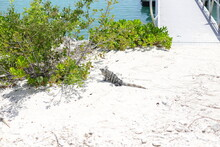 Walk Around The Bahamas Islands, Different Animals, Plants And Things