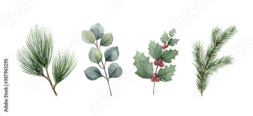 Fototapeta Watercolor vector Christmas set with fir branches and eucalyptus. obraz