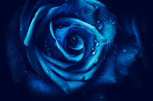 Artistic Image Of Flower Romantic Blue Rose With Drops Of Water Like  Flowery Art