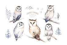 Watercolor Winter Forest Animals Owl Isolated On White Background. Wild Forest Owls Animals Set. Hand Painted Winter Christmas Card
