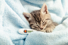 Beautiful Tabby Kitten Measures Temperature By Thermometer. Little Ill Baby Cat Lies In Blue Plaid. Vet, Veterinary Clinic And Veterinarian Medicine For Pets And Cats, Animal Children Health Care
