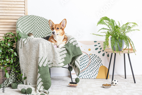 Cute dog with different pet accessories at home Fototapet